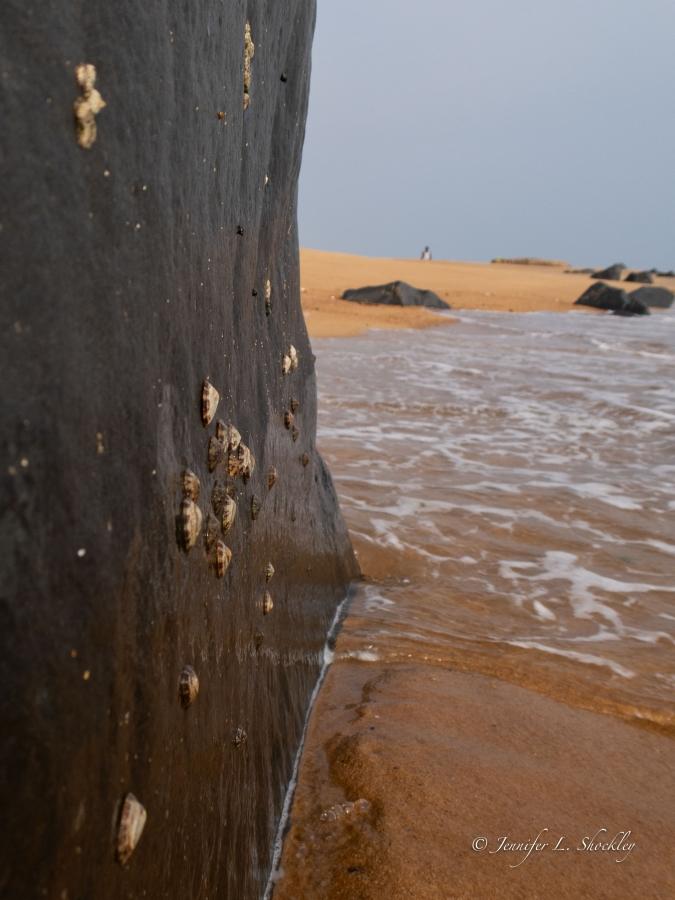 Limpets on rocks, Monrovia, Liberia, Mar 2019
